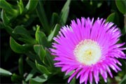 Blume Costa Calida
