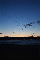 Natur: Vögel Costa Brava